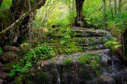 Parque Natural del Saja-Besaya (Cantabria)